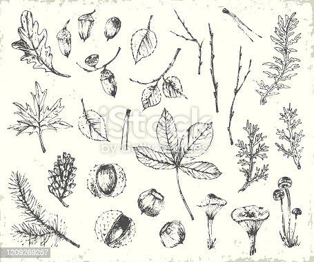 Hand drawn ink botanical illustration. Forest plants background with pine branch, cone, oak leaf, acorn, mushrooms, lichen, tree branches, maple leaf, birch leaf, chestnut. Elements for ecological design.