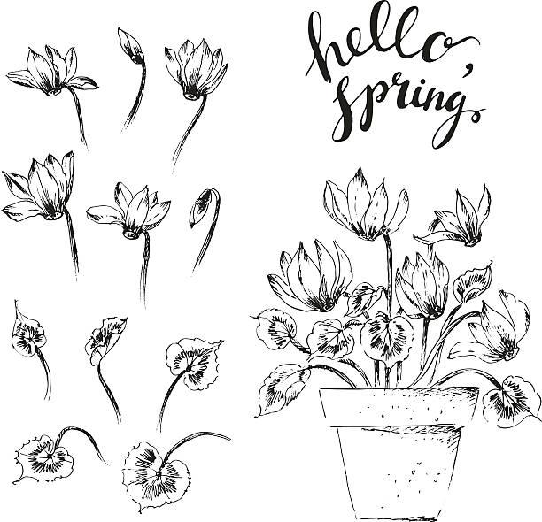 handgezeichnet tinte alpenveilchen topf blume, knospen, blüten und schriftzug - alpenveilchen stock-grafiken, -clipart, -cartoons und -symbole