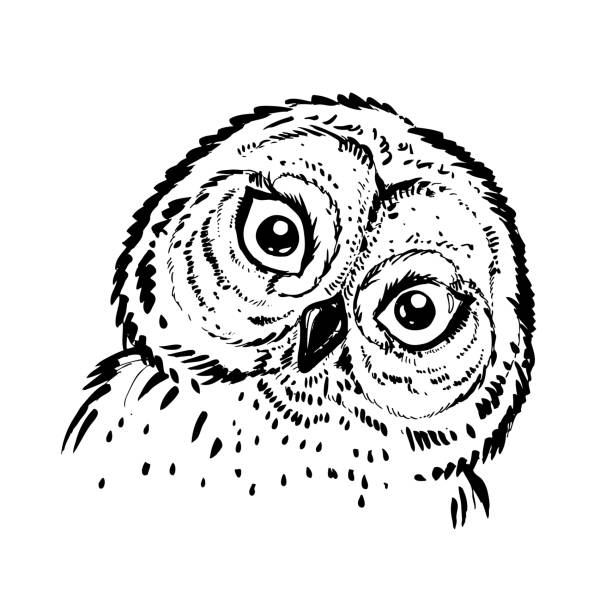 hand drawn ink illustration owl. vector eps 8 - black and white owl stock illustrations, clip art, cartoons, & icons