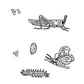 Hand drawn ink monochrome butterfly, grasshopper, egg, larvae