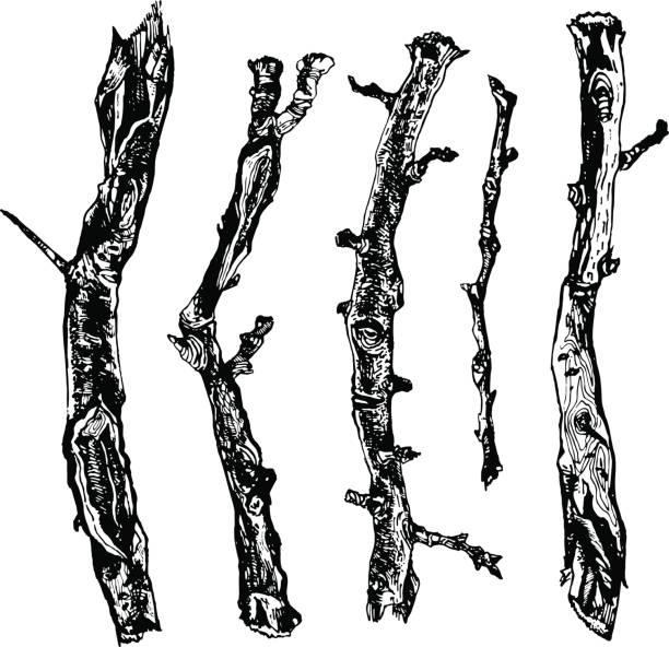 Hand drawn ink rustic design vector elements vector art illustration