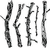 Hand drawn ink rustic design vector elements