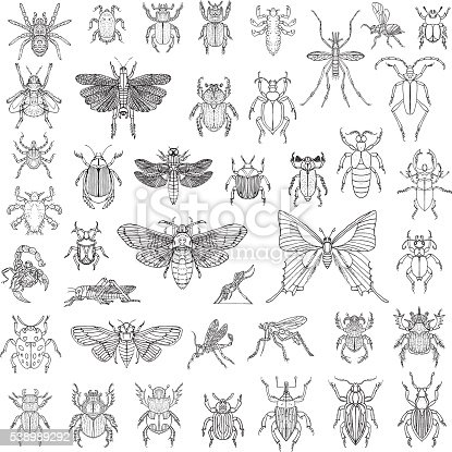 Hand Drawn Insects. Vector illustration.