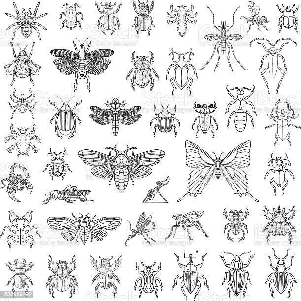 Hand drawn insects vector set vector id538989292?b=1&k=6&m=538989292&s=612x612&h=yt6xvmsx0  bdjgtcunud5f1tckchsrwa43r4skajzy=
