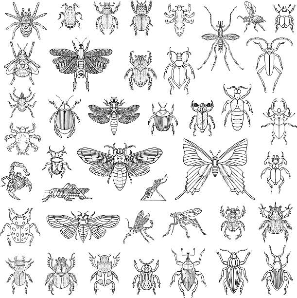 hand drawn insects vector set - bugs stock illustrations, clip art, cartoons, & icons