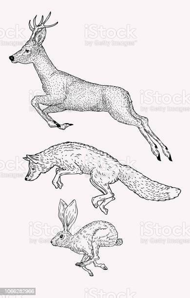 Hand drawn jumping deer fox hare vintage animal graphic christmas vector id1066282966?b=1&k=6&m=1066282966&s=612x612&h=oejuzvl1 zaefoq1y10gp1ouz8yko18n6itcirq0hou=