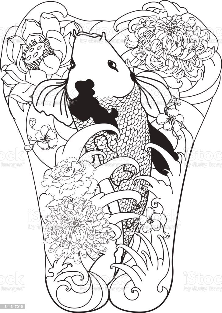 7dbcdb9f8cf2c Hand drawn koi fish with flower tattoo.Japanesse style Koi carp fish with  lotus and cherry blossm flower. - Illustration .