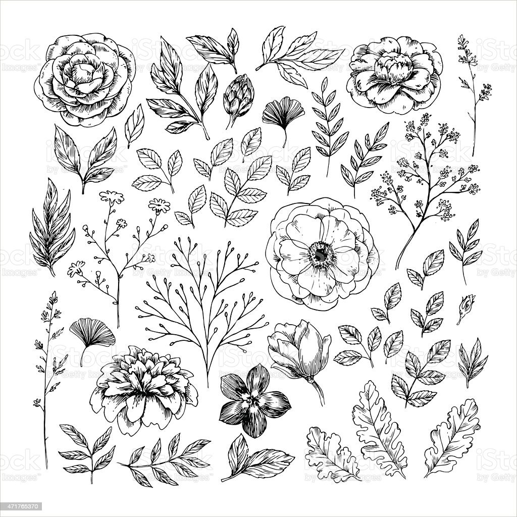 Uncategorized Drawn Leaf hand drawn leaf and flower collection vector illustration stock royalty free art