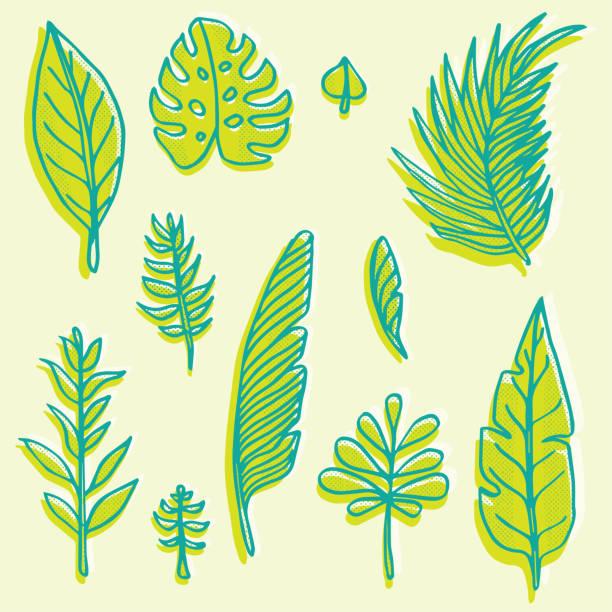 Ensemble de feuilles dessinés à la main - Illustration vectorielle