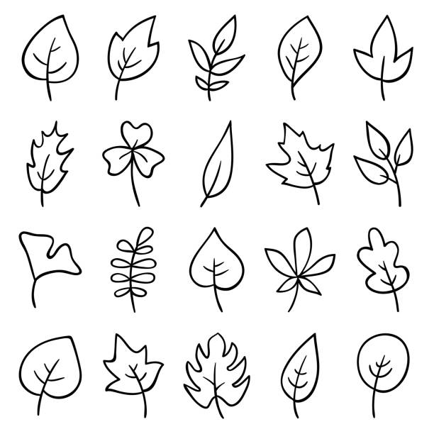 Hand drawn leaves Set of hand drawn leaves. Doodle design elements. temperate flower stock illustrations