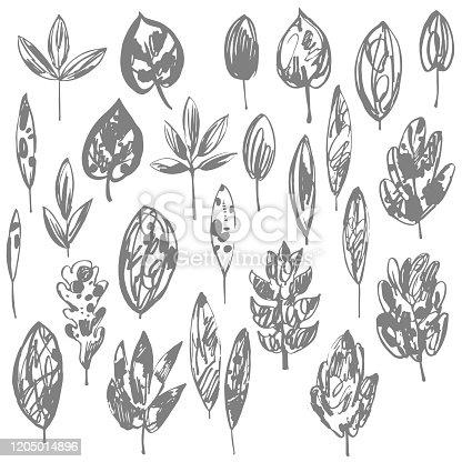 Hand drawn  leaves. Vector illustration
