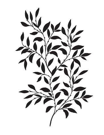 Hand Drawn Leaves Vine