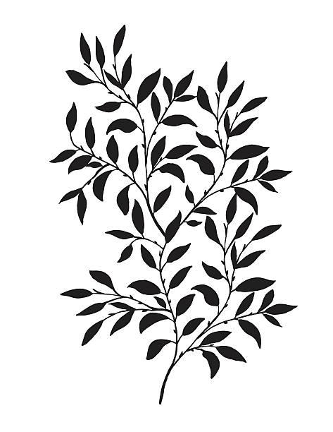 ręcznie narysowane liście winorośli - gałąź część rośliny stock illustrations