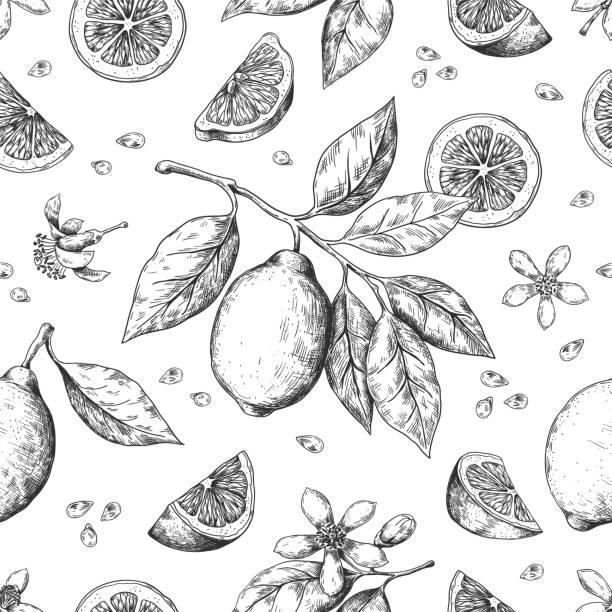 ręcznie rysowany wzór cytryny. vintage bezszwowa tekstura na etykiecie soku, szkic atramentu cytrusowego. wektor pomarańczowy cytrynowy wzór owoców limonki - cytryna stock illustrations