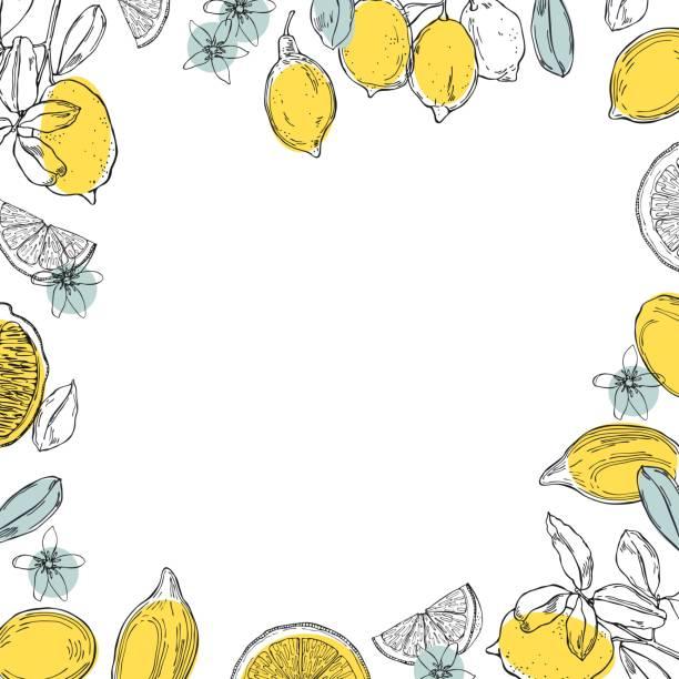 ilustrações, clipart, desenhos animados e ícones de limões desenhados à mão.  fundo vetorial. - conceitos e temas