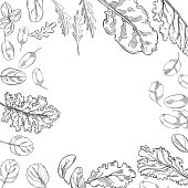 istock Hand drawn  lettuce. Vector  background. 1265945913