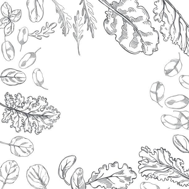 hand gezeichneter salat. vektorhintergrund. - farbsättigung stock-grafiken, -clipart, -cartoons und -symbole