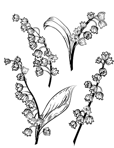 Hand Drawn Lily Of The Valley Flowers
