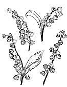 Hand Drawn Lily Of The Valley Flowers on a white background