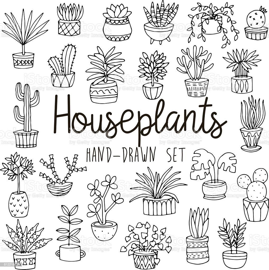 house plants drawing. hand drawn line set of houseplants in pots royaltyfree stock vector art house plants drawing u