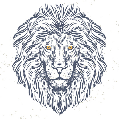 Hand drawn lion head illustration