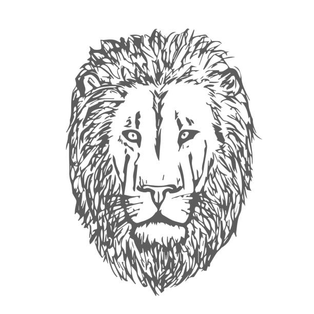 44 Background Of The Lion Tattoo Outline Illustrations Royalty Free Vector Graphics Clip Art Istock Tattoo ideas lion outline tattoo cat tattoos art tattoos piercings. 44 background of the lion tattoo outline illustrations royalty free vector graphics clip art istock