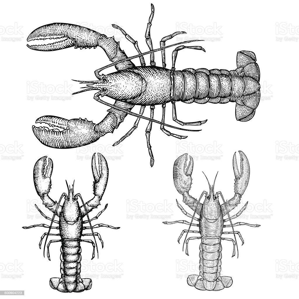 Hand Drawn Lobster vector art illustration