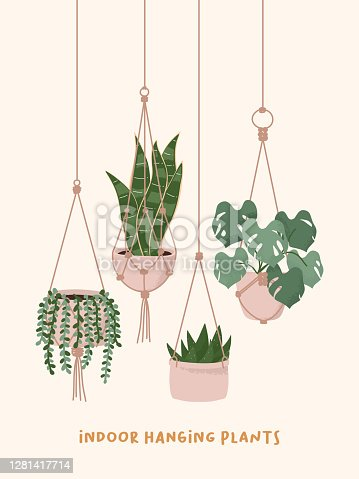 Hand drawn Macrame hangers for plants growing in pots. String of Pearls, Snake plant, Aloe and Monstera elements. Houseplant flower pot vector illustration.
