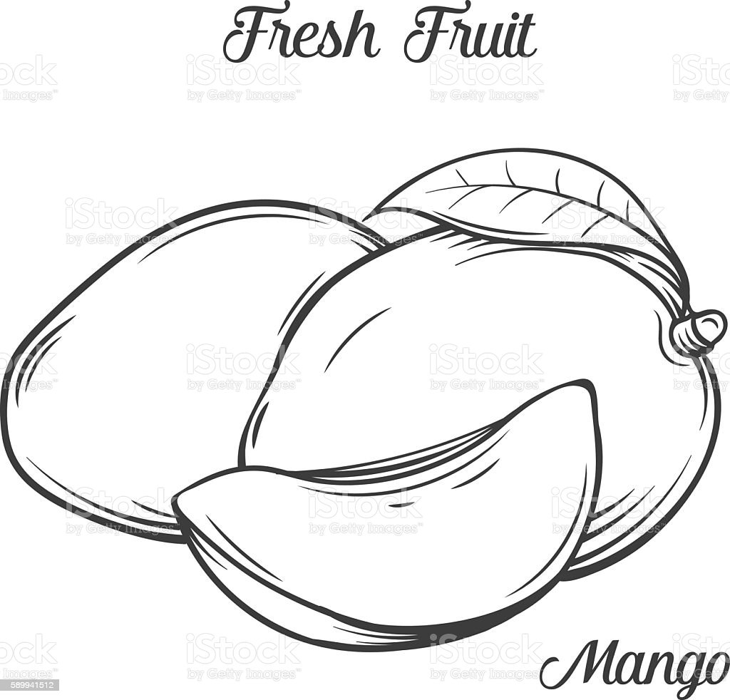 Line Art Mango : Hand drawn mango icon cliparts vectoriels et plus d