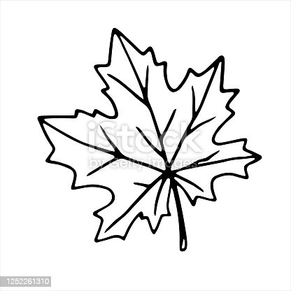 Hand drawn maple leaf outline isolated on white background. Vector symbol of autumn, nature, Canada in doodle style.