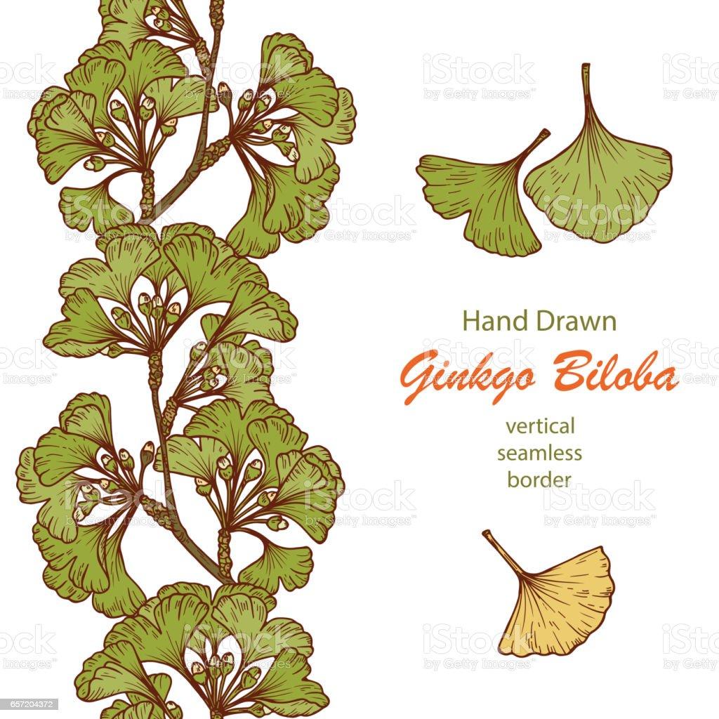 Hand drawn Medicinal plant Ginkgo Biloba Tree. Branches Vertical seamless border and Leaves set. Vector illustration. vector art illustration