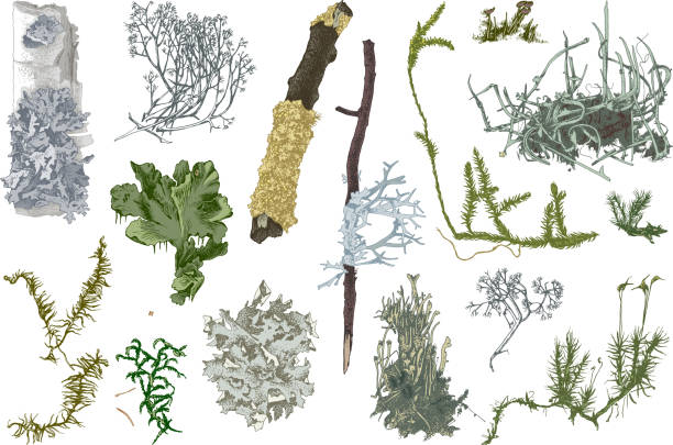 Hand drawn mosses and lichens Set of colorful hand drawn mosses and lichens. Vector illustration in retro style moss stock illustrations
