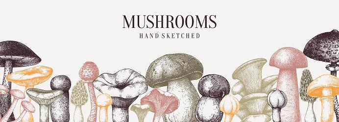 Hand drawn mushrooms banner