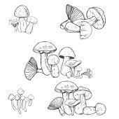 istock Hand drawn  mushrooms.   Vector  illustration. 1257458908
