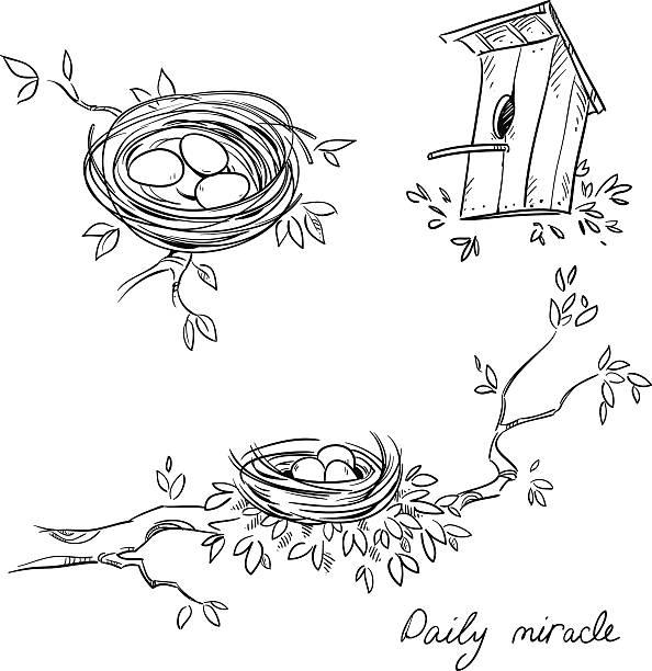 bildbanksillustrationer, clip art samt tecknat material och ikoner med hand drawn nests and a birdhouse - bo
