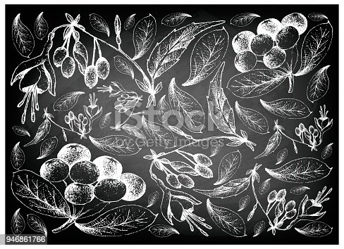 istock Hand Drawn of Acai Berries and Brinco de Princesa Frutis 946861766