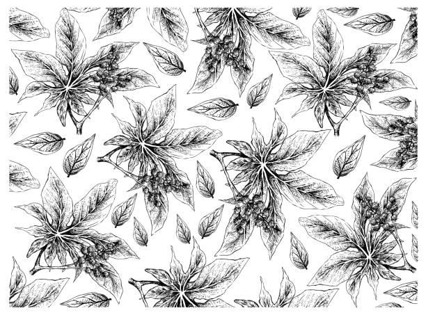hand gezogen von castor-bohnen auf weißem hintergrund - wunderbaum stock-grafiken, -clipart, -cartoons und -symbole