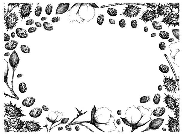 handriss der baumwollblumen mit buden und castor-bohnen - wunderbaum stock-grafiken, -clipart, -cartoons und -symbole