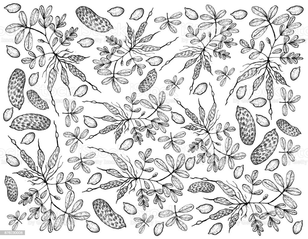 Mão desenhada de fundo de plantas de amendoim fresco - ilustração de arte em vetor