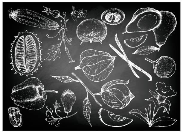 hand gezeichnet von kürbis und kürbis gemüse - feigensalat stock-grafiken, -clipart, -cartoons und -symbole