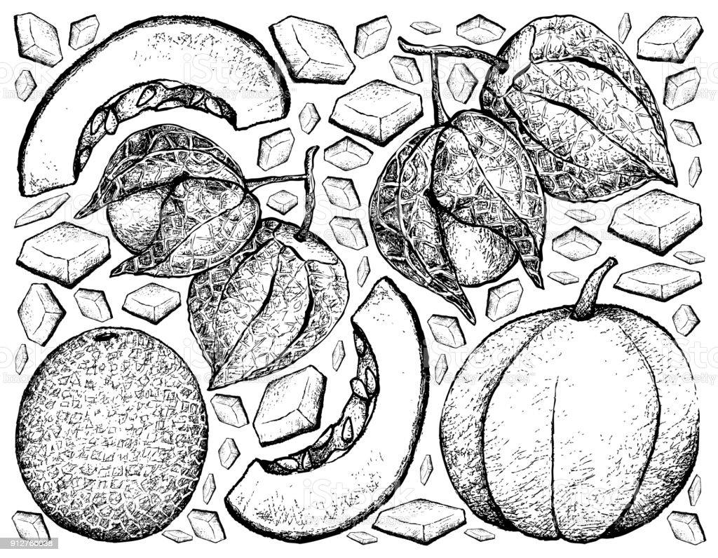 Mano alzada de melón y uchuva - ilustración de arte vectorial