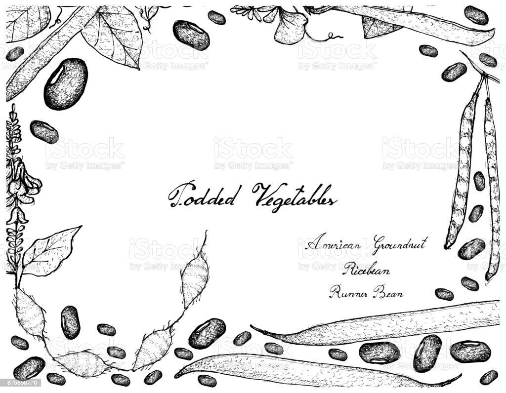Hand Drawn of Podded Vegetables Frame on White Background vector art illustration