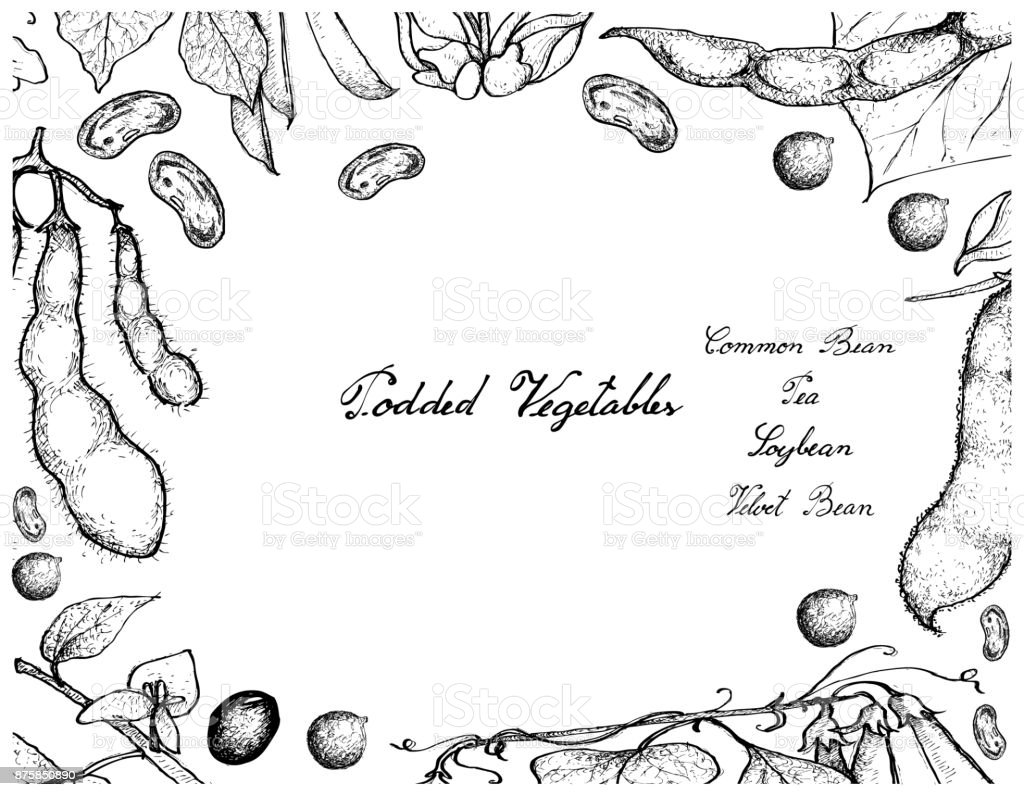 Hand Drawn of Podded Vegetables Frame on White Background vector art illustration