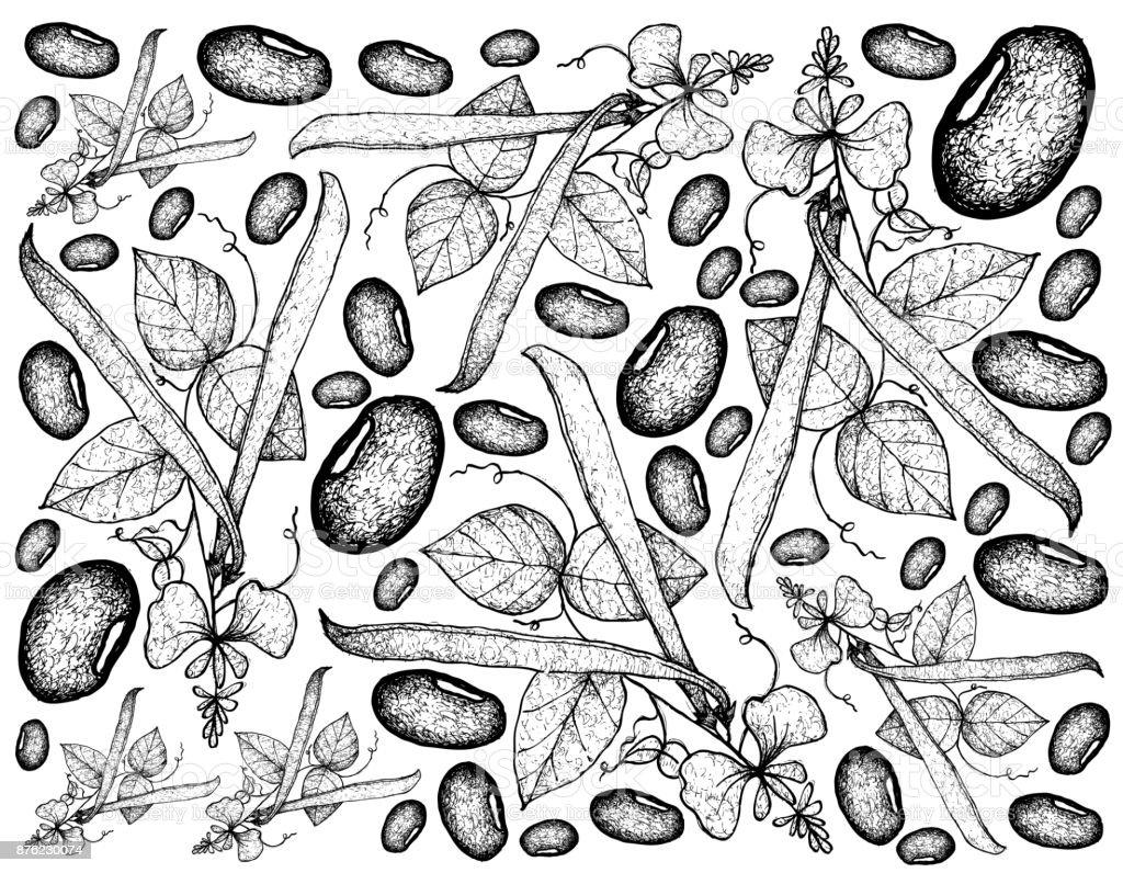 Hand Drawn of Runner Bean Plants Background vector art illustration