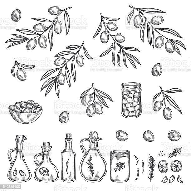 Hand drawn olive graphic set vector illustration vector id540386400?b=1&k=6&m=540386400&s=612x612&h=zzow pzgmhcpszam3arhbsmpl46bovmfuoqbf3rij1c=