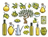 Hand drawn colored olives, tree branches, glass bottle, jug , metal dispenser and olive oil. Vector illustration outline in retro sketch style.