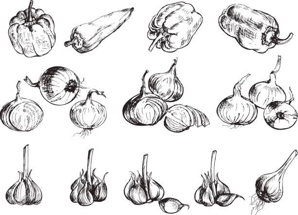 illustrazioni stock, clip art, cartoni animati e icone di tendenza di hand drawn onion, pepper and garlic. - aglio cipolla isolated