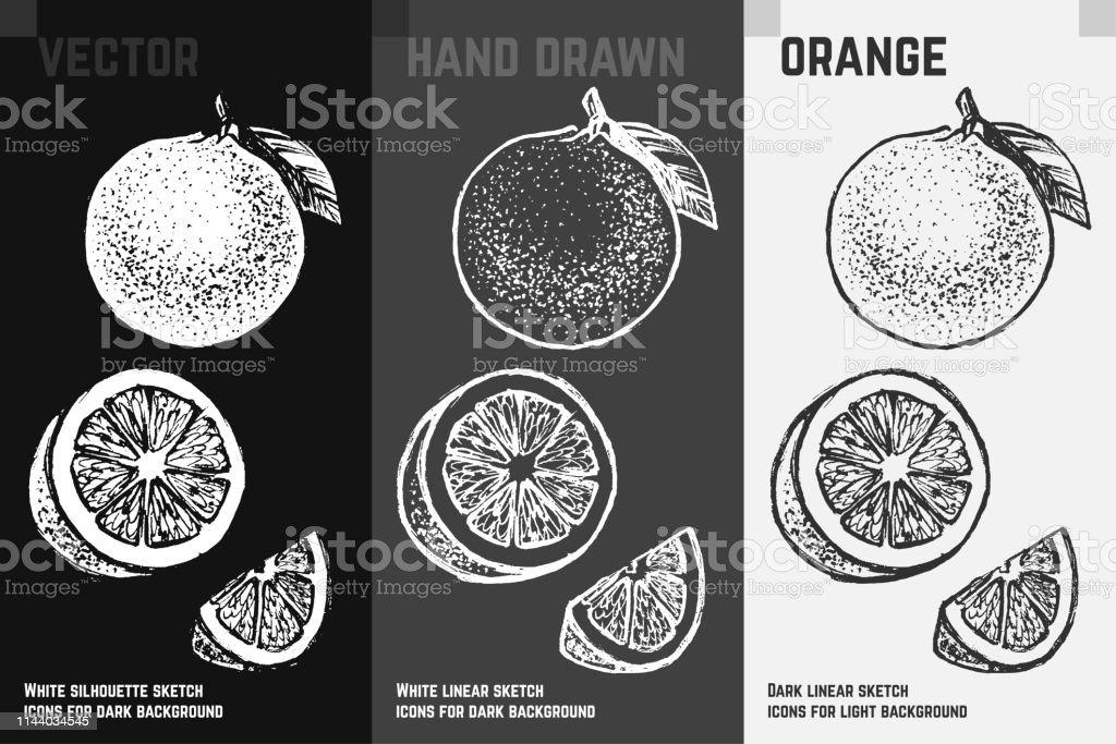Citrus icons set. Orange fruit sketch
