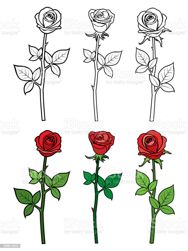 Ilustracion De Mano Dibujar El Esquema Y Rosas Rojas Flores Y Mas