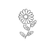 Hand drawn ox-eye daisy flower, outline vector illustration, black and white simple drawing
